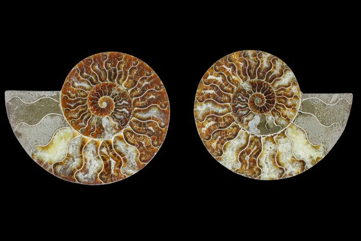 "5.3"" Agate Replaced Ammonite Fossil (Pair) - Madagascar"