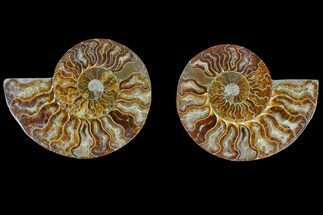 "5.4"" Agate Replaced Ammonite Fossil (Pair) - Madagascar For Sale, #166877"