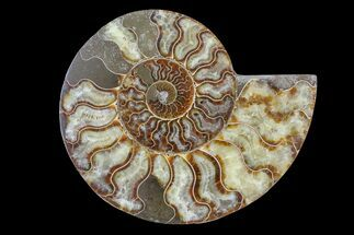 "7.3"" Cut & Polished Ammonite Fossil (Half) - Madagascar For Sale, #166955"