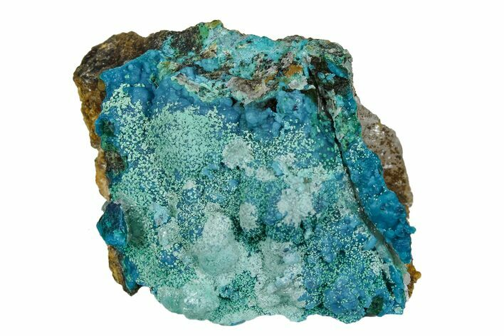 "1.65"" Botryoidal Chrysocolla and Malachite Formation - Tentadora Mine"