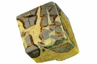 Septarian - Fossils For Sale - #169524