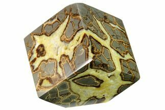 Septarian - Fossils For Sale - #169527