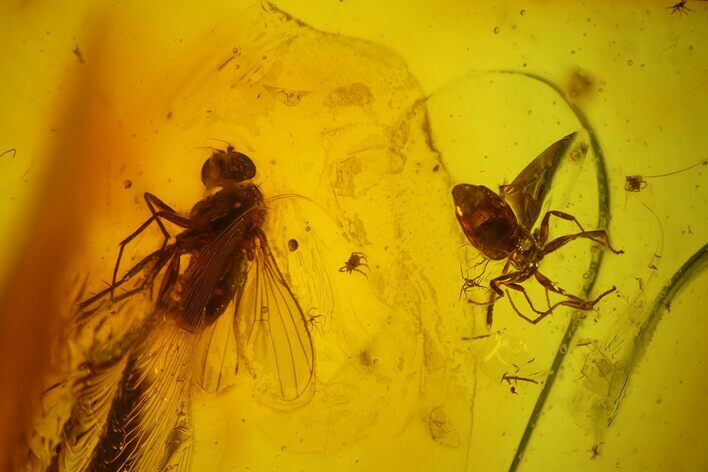 Fossil Ant, Fly and Two Mites in Baltic Amber