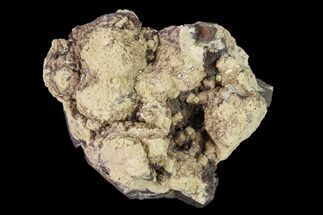 "Buy 1.9"" Poldervaartite Aggregation - N'Chwaning Mine, South Africa - #169786"