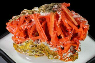 Crocoite - Fossils For Sale - #171654