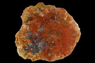 "Buy 14.7"" Colorful Petrified Wood (Araucarioxylon) Round - Arizona - #172021"