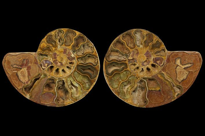 "8.7"" Cut & Polished Ammonite Fossil (Pair) - Jurassic"