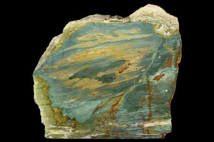 "6.7"" Gary Green Jasper (Larsonite) Bog Wood Stand Up - Oregon"