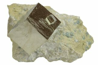 Pyrite - Fossils For Sale - #168462