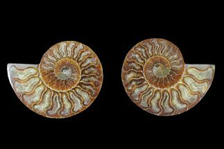 "4.7"" Agate Replaced Ammonite Fossil (Pair) - Madagascar For Sale, #166856"