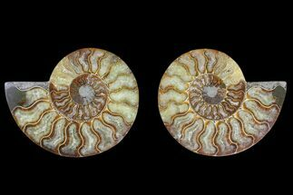"Buy 5.6"" Agate Replaced Ammonite Fossil (Pair) - Madagascar - #169450"