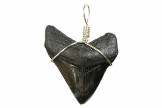 "Buy 1.58"" Fossil Megalodon Tooth Necklace - #173857"