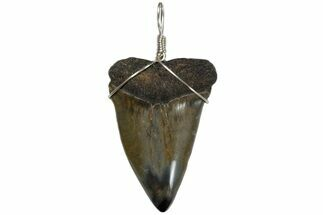 "Buy 2.3"" Wire Wrapped, Fossil Mako Tooth Necklace  - #173878"