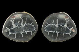 "2.9"" Cut/Polished Septarian Nodule Pair - Morocco For Sale, #174431"