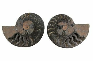 "3.3"" Cut/Polished Ammonite Fossil (Pair) - Unusual Black Color For Sale, #165662"