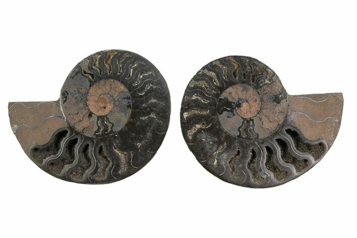 "3.3"" Cut/Polished Ammonite Fossil (Pair) - Unusual Black Color"