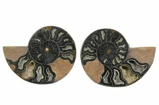 "Buy 3.8"" Cut/Polished Ammonite Fossil (Pair) - Unusual Black Color - #165664"