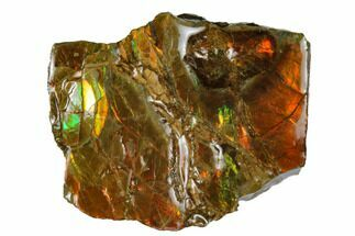 "1.5"" Iridescent Ammolite (Fossil Ammonite Shell) - Alberta, Canada For Sale, #175166"