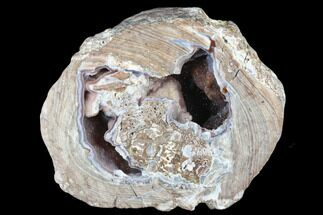 "Buy 5.6"" Crystal Filled Dugway Geode (Polished Half) - Utah - #176755"