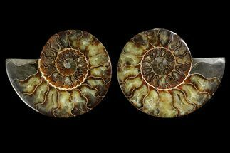 "Buy 5.9"" Agate Replaced Ammonite Fossil (Pair) - Madagascar - #169021"
