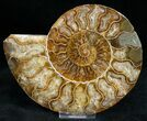 "Bargain 5.6"" Polished Ammonite Pair - #11787-2"