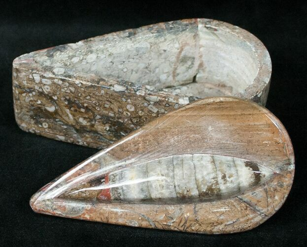 Small Fossil Orthoceras Box (Teardrop) - Stoneware