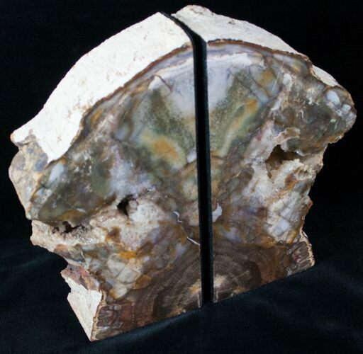 "Madagascar Petrified Wood Bookends - 7.5"" Tall, 4"" Wide"