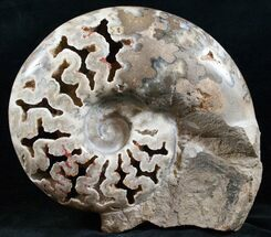 "Massive 11.3"" Polished Ammonite With Stone Base For Sale, #13835"