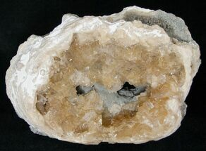 "Buy 5.2"" Fossil Clam Fossil with Calcite Crystals - Florida - #14725"