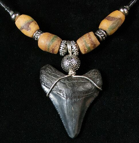 "1.6"" Megalodon Tooth Necklace"