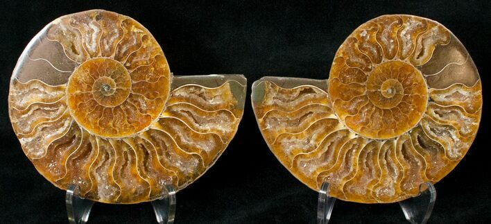 "3.75"" Polished Ammonite Pair - 110 Million Years"